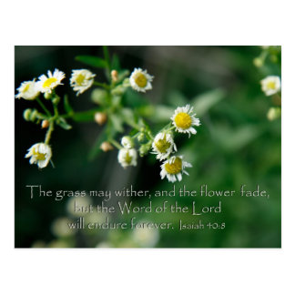 Isaiah 40:8 The grass may wither and fade Postcard
