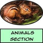 Animal - Prints, Posters