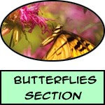 Butterflies & Insects - Prints, Posters