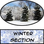 Winter - Prints, Posters