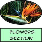 Flower - Prints, Posters