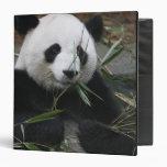Giant pandas at the Giant Panda Protection & 3 Ring Binder