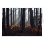 Suns rays pouring into a darkened forest card