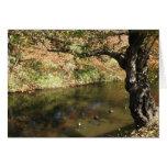 Hirosaki Park - Hirosaki city, Japan Card