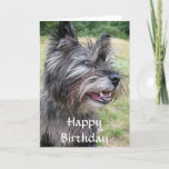 Cairn Terrier dog happy birthday greeting card