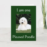 """""""I AM ONE PLEASED POODLE"""" THANK YOU CARD"""