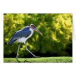 Marabou stork walking on grass card