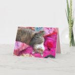 Dilemma of Princess Tatus Cat Card