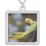 Roseringed Parakeet,Keoladeo National Park, Silver Plated Necklace
