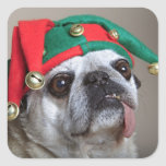Funny looking pug with tongue hanging out square sticker