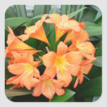 Orange Bush Lily Flower or Natal Lily Square Sticker