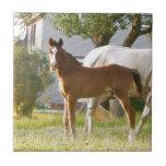 CUTE HORSE FOAL AND MARE CERAMIC TILE