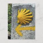 El Camino de Santiago de Compostela, Spain, shell Postcard