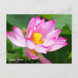 a postcard of Lotus in China