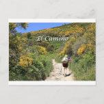El Camino de Santiago de Compostela, Spain, trail Postcard