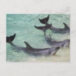 Dolphins, Sea World, Gold Coast, Queensland, Postcard