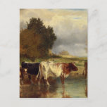 Calf cows at the marl by Constant Troyon Postcard