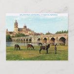 Vintage Spain,  Salamanca, Cathedral Postcard