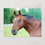 Chestnut Mare Postcard