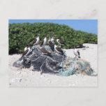 Kure Atoll Beach Debris Postcard