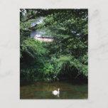 Aomori swan postcard