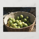 A basket full of guavas postcard