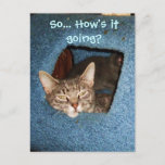 HOW'S IT GOING, KITTY postcard