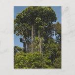 Rewa River edge Rainforest Guyana Postcard