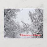 Edmonton, Alberta Winter Post card