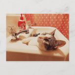 In the Sink Kitty Card