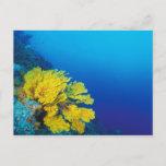 Indonesia, Banda Islands, prolific coral reefs Postcard