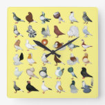 36 Pigeon Breeds Square Wall Clock