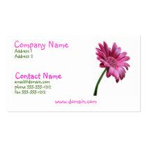 Pink Gerbera Daisy Business Card