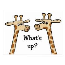 What's up? Giraffe postcards