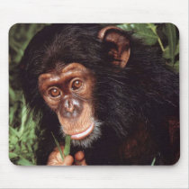 Chimpansee Mouse Pads