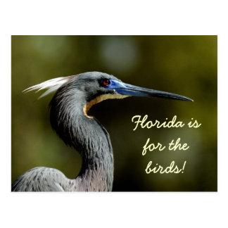 ¡Isfor de la Florida los pájaros! Postal