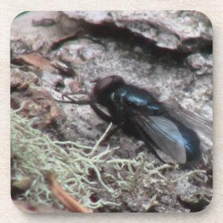 Ishawooa Wyoming Fauna Insects / Arachnids Beverage Coaster