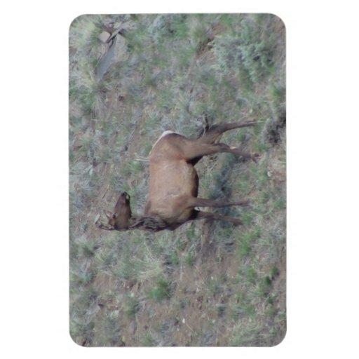 Ishawooa Wyoming Fauna Mammals Deer Pronghorn Elk Rectangular Magnets