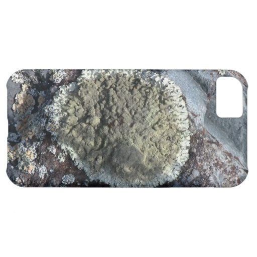 Ishawooa Wyoming Flora Fungi Lichen Mosses iPhone 5C Cases