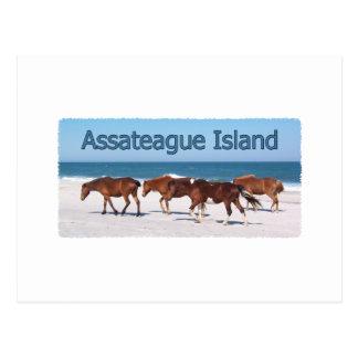 Isla de Assateague (potros en logotipo de la Postales