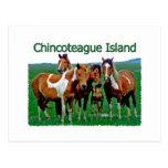 Isla de Chincoteague (potros) Tarjeta Postal