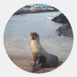 Isla de las Islas Galápagos del león marino Etiqueta Redonda