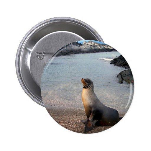 Isla de las Islas Galápagos del león marino Pin