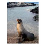 Isla de las Islas Galápagos del león marino Postal
