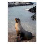 Isla de las Islas Galápagos del león marino Felicitación