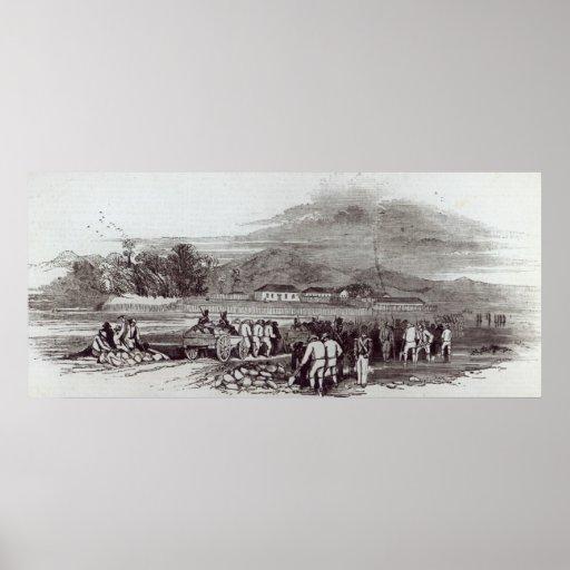 Isla de Norfolk Poster