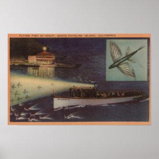 Isla de Santa Catalina, casino de CA, pez volador Póster