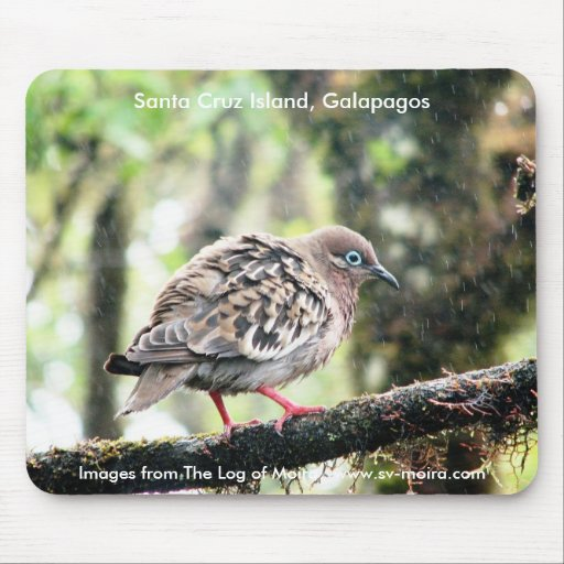 Isla de Santa Cruz, las Islas Galápagos, pájaro en Tapete De Raton