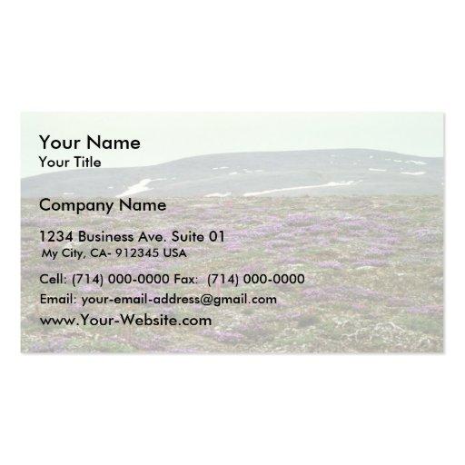 Isla de St Matthew, (o púrpura) Oxytrope negruzco Tarjetas De Visita