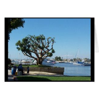 Isla del balboa, tarjeta del CA